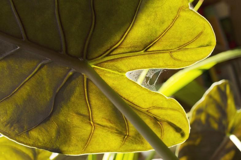 adam paucina
