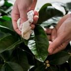 Čišćenje listova
