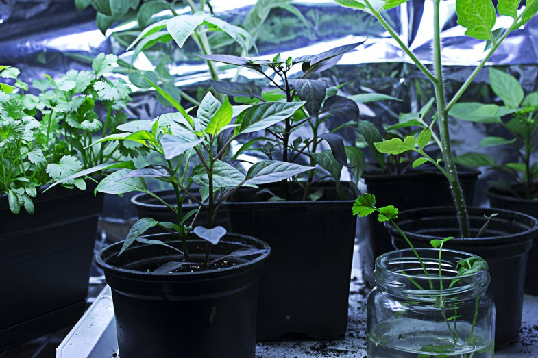 biljcice3