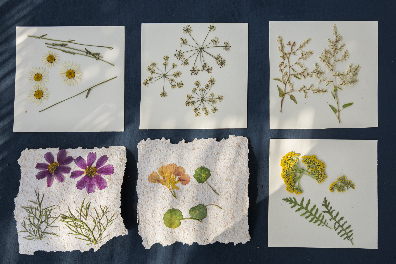 Herbarij biljke za UPUTSTVO ZA