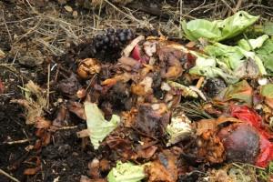 kompost7
