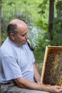 Karlo Vogrinčič u radu sa pčelama ne nosi zaštitno odijelo.
