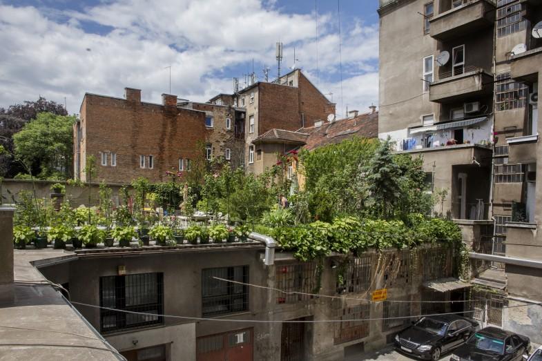 Urbani ružičnjak